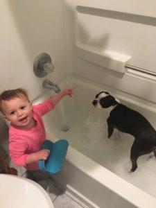 Boston Terrier Quiz Answers