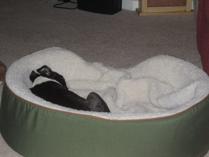 How To Crate Train A Boston Terrier