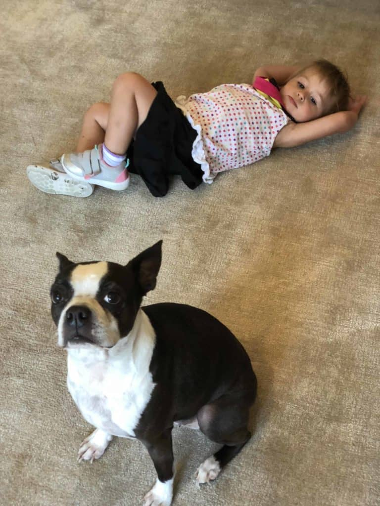 How Do I Remove My Boston Terriers Tear Stains? Boston Terrier Society.