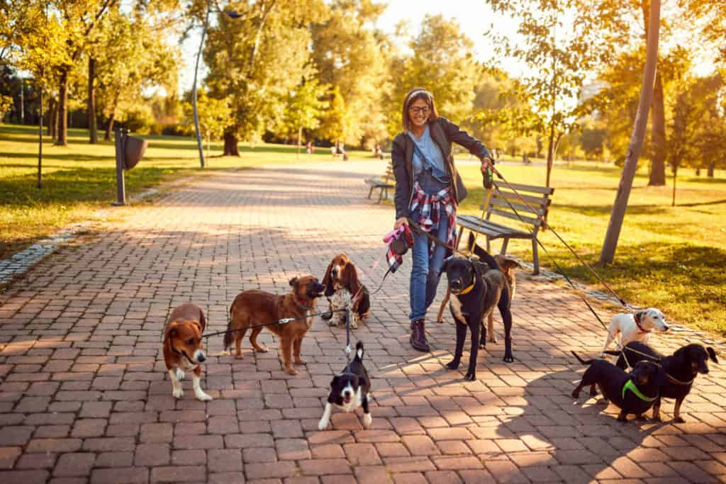25 Questions To Ask Your Dog Walker Before You Hire Them