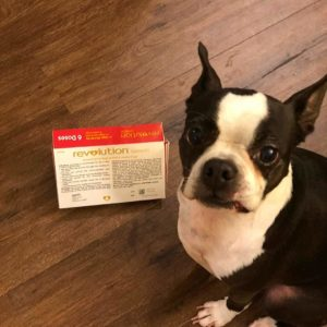 Price of Pet Insurance for Boston Terriers: My Real Example. Boston Terrier Society.