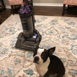 Recommended Vacuum Boston Terrier Society.