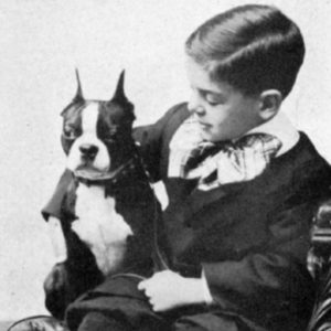 who can become a boston terrier foster parent?