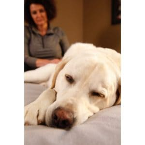 Does Your Dog Need A Message? Full Interview With Dog Massues