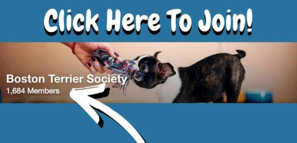 Boston Terrier Society Facebook Community