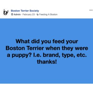 boston terrier facebook group question. what did you feed your boston terrier puppy