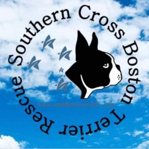 Southern Cross Boston Terrier Rescue. How to adopt a boston terrier.