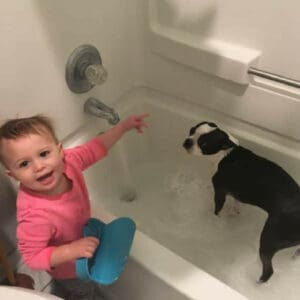 How to stop your Boston Terrier from shedding.