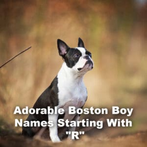 Boston Terrier Boy Names Starting With R