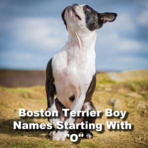 Best 75+ Boston Boy Names That Start With The Letter O