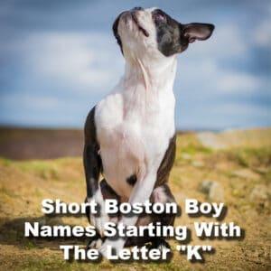 Boston terrier boy names