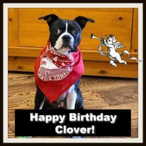 Happy Birthday Boston Terrier