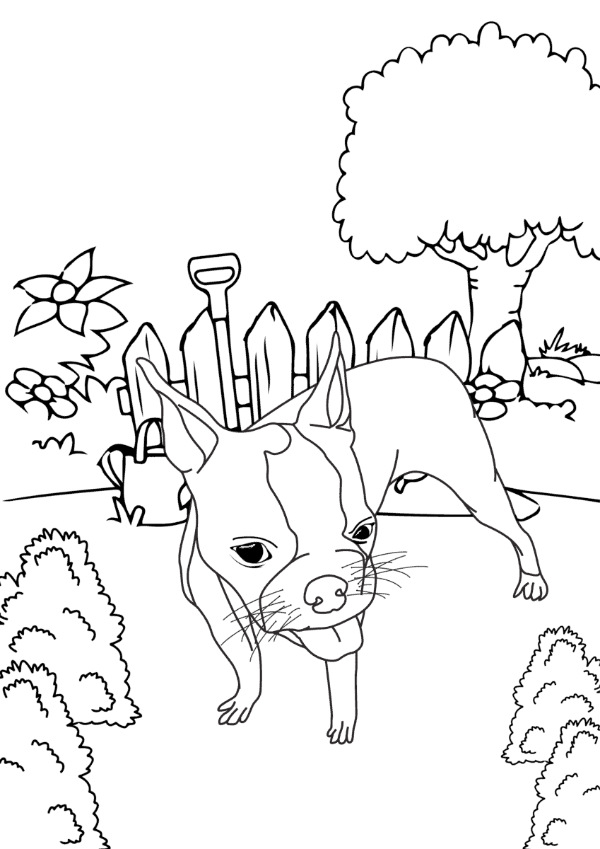 Boston Terrier Coloring Pages - FREE Printable Color Pages ...