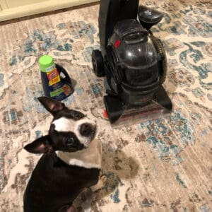 boston terrier next to a vacuum