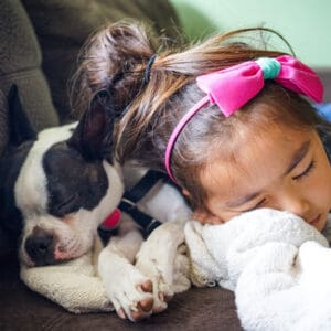 Boston Terrier Rescues In Michigan - Cost & Adoption Process
